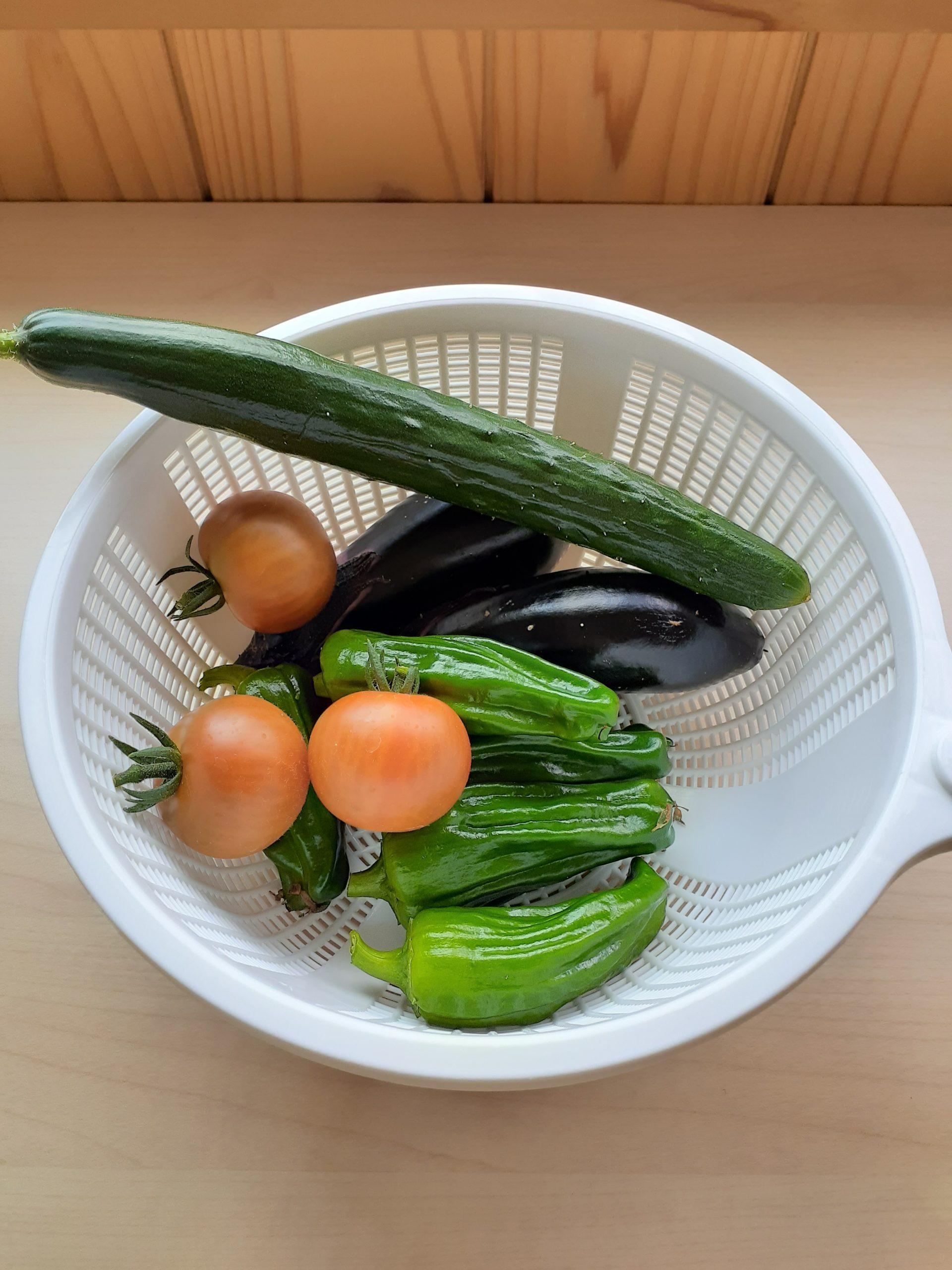 児童クラブの野菜収穫🍅🍆🥒
